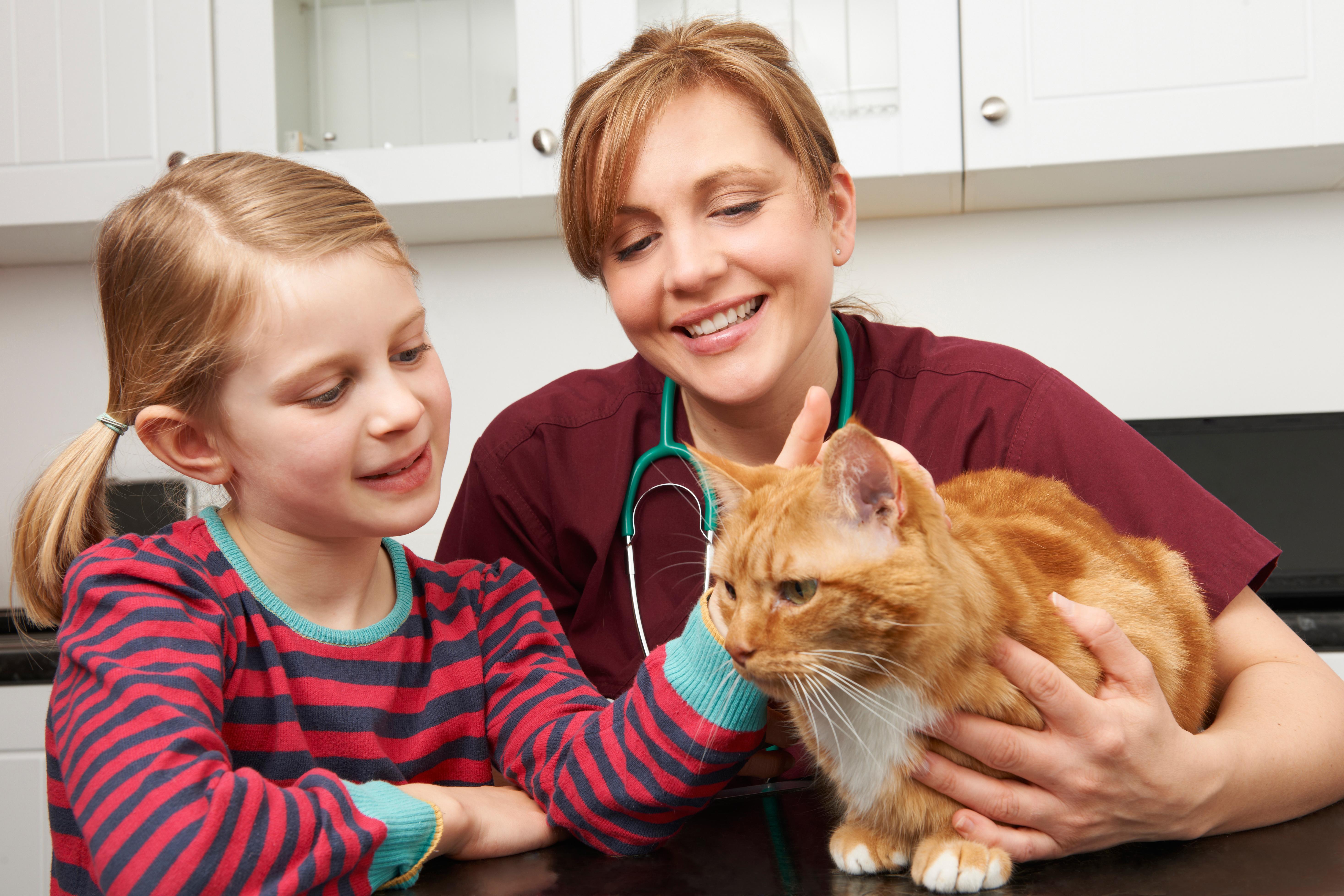 ajax vet hospital-mobile dogs cats rabbits ferrets, guinea